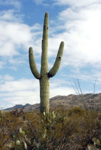 everything\'s coming up cactus.